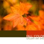 fall_colors1