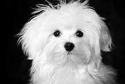 Photo of little white dog